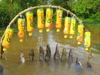 New Fishing Technique Trap Using 10 Bottles & 10 Hooks